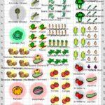 Sebze Bahçesi Nasıl Düzenlenir? 24