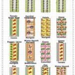 Sebze Bahçesi Nasıl Düzenlenir? 27