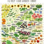 Sebze Bahçesi Nasıl Düzenlenir? 28