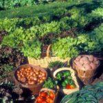 Sebze Bahçesi Nasıl Düzenlenir? 29