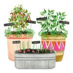 Sebze Bahçesi Nasıl Düzenlenir? 30