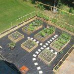 Sebze Bahçesi Nasıl Düzenlenir? 37