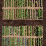 Sebze Bahçesi Nasıl Düzenlenir? 39