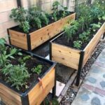 Sebze Bahçesi Nasıl Düzenlenir? 45