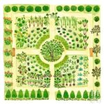 Sebze Bahçesi Nasıl Düzenlenir? 46