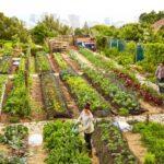 Sebze Bahçesi Nasıl Düzenlenir? 48