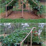 Sebze Bahçesi Nasıl Düzenlenir? 50