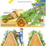 Sebze Bahçesi Nasıl Düzenlenir? 52