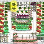 Sebze Bahçesi Nasıl Düzenlenir? 53