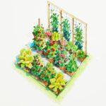 Sebze Bahçesi Nasıl Düzenlenir? 54