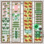 Sebze Bahçesi Nasıl Düzenlenir? 58