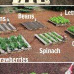 Sebze Bahçesi Nasıl Düzenlenir? 5