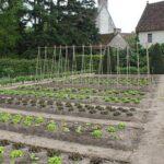 Sebze Bahçesi Nasıl Düzenlenir? 62