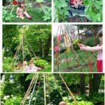 Sebze Bahçesi Nasıl Düzenlenir? 63