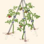 Sebze Bahçesi Nasıl Düzenlenir? 65