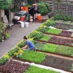 Sebze Bahçesi Nasıl Düzenlenir? 67