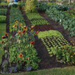 Sebze Bahçesi Nasıl Düzenlenir? 68