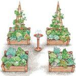Sebze Bahçesi Nasıl Düzenlenir? 69