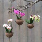 Orkide Nasıl Bakılır? 7