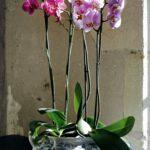 Orkide Nasıl Bakılır? 8