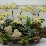 Orkide Nasıl Bakılır? 9