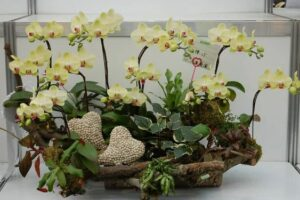 Orkide Nasıl Bakılır?