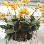 Orkide Nasıl Bakılır? 19