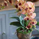 Orkide Nasıl Bakılır? 20