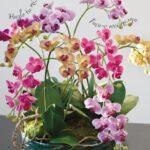 Orkide Nasıl Bakılır? 21