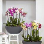 Orkide Nasıl Bakılır? 24
