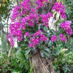 Orkide Nasıl Bakılır? 26