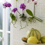 Orkide Nasıl Bakılır? 27