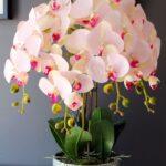 Orkide Nasıl Bakılır? 10