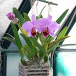 Orkide Nasıl Bakılır? 29