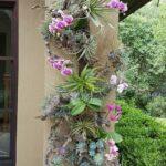 Orkide Nasıl Bakılır? 11