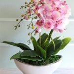Orkide Nasıl Bakılır? 12