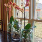 Orkide Nasıl Bakılır? 13