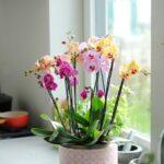 Orkide Nasıl Bakılır? 14