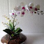 Orkide Nasıl Bakılır? 16