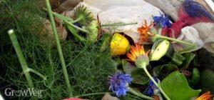 Sebze Meyve Atıklarından Gübre Yapımı 1