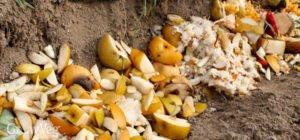 Sebze Meyve Atıklarından Gübre Yapımı 3