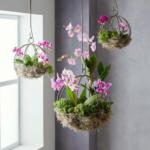 Asılı Orkide Saksı Yapımı 2