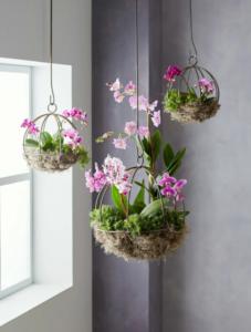 Asılı Orkide Saksı Yapımı