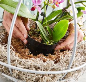 Asılı Orkide Saksı Yapımı 4