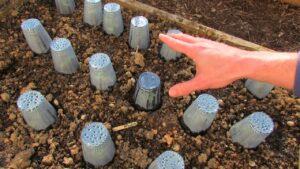 Bitkileri Dondan Koruma Yolları 10