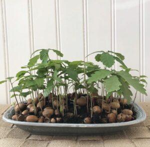 Avokado Nasıl Yetiştirilir Evde 3