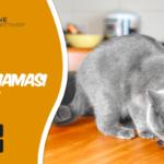 Kedi Dostumuz İçin En İyi Kedi Mamasını Bulmanın Kolay Yolu