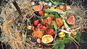 Sebze Meyve Atıklarından Gübre Yapımı 4