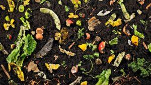 Sebze Meyve Atıklarından Gübre Yapımı 6
