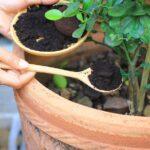 Bahçede ve Evde Kahve Kullanmanın Faydaları